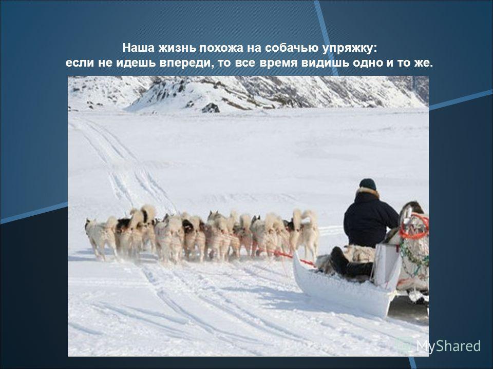 Наша жизнь похожа на собачью упряжку: если не идешь впереди, то все время видишь одно и то же.