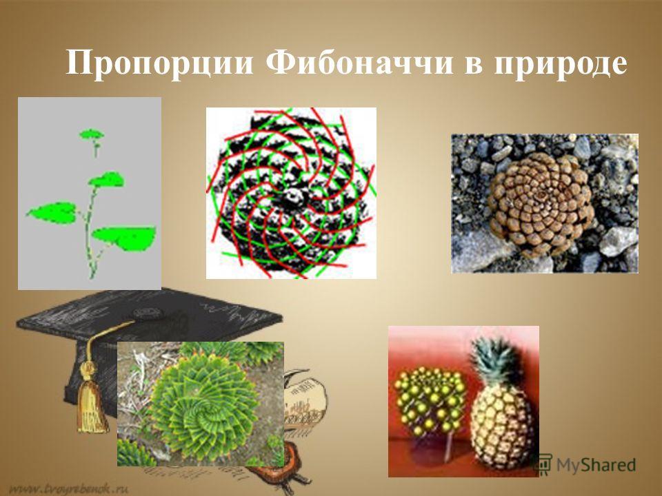 Пропорции Фибоначчи в природе