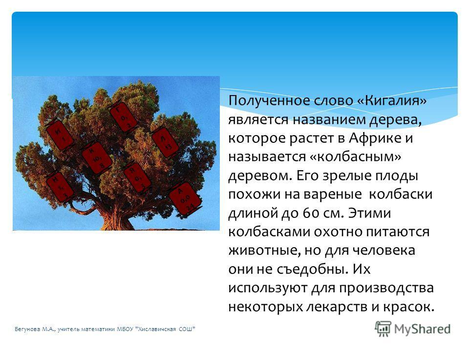 Полученное слово «Кигалия» является названием дерева, которое растет в Африке и называется «колбасным» деревом. Его зрелые плоды похожи на вареные колбаски длиной до 60 см. Этими колбасками охотно питаются животные, но для человека они не съедобны. И
