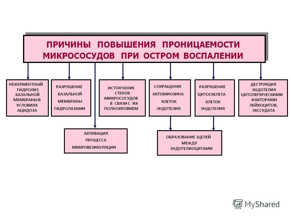ПРИЧИНЫ ПОВЫШЕНИЯ ПРОНИЦАЕМОСТИ СТЕНОК МИКРОСОСУДОВ ПРИ ОСТРОМ ВОСПАЛЕНИИ НЕФЕРМЕНТНЫЙ ГИДРОЛИЗ БАЗАЛЬНОЙ МЕМБРАНЫ В УСЛОВИЯХ АЦИДОЗА РАЗРУШЕНИЕ БАЗАЛЬНОЙ МЕМБРАНЫ ГИДРОЛАЗАМИ ИСТОНЧЕНИЕ СТЕНОК МИКРОСОСУДОВ В СВЯЗИ С ИХ ПОЛНОКРОВИЕМ АКТИВАЦИЯ ПРОЦЕСС
