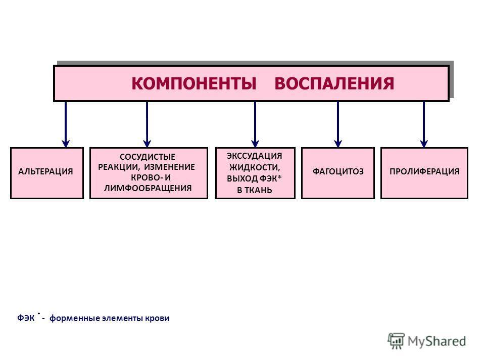 ФЭК * -форменные элементы крови АЛЬТЕРАЦИЯ СОСУДИСТЫЕ РЕАКЦИИ, ИЗМЕНЕНИЕ КРОВО- И ЛИМФООБРАЩЕНИЯ ФАГОЦИТОЗПРОЛИФЕРАЦИЯ КОМПОНЕНТЫ ВОСПАЛЕНИЯ ЭКССУДАЦИЯ ЖИДКОСТИ, ВЫХОД ФЭК* В ТКАНЬ