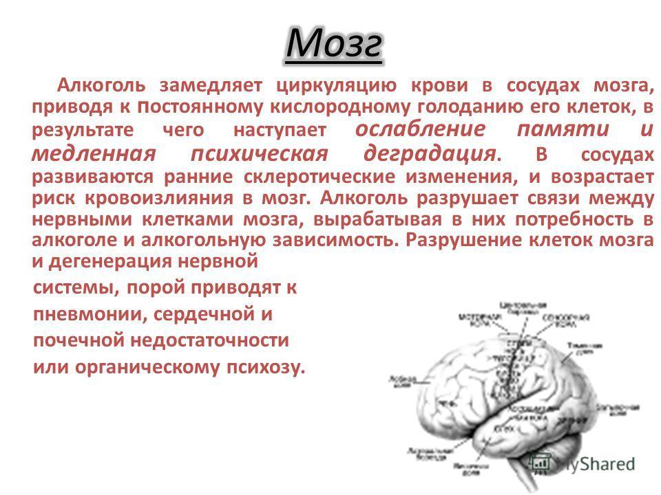 Алкоголь замедляет циркуляцию крови в сосудах мозга, приводя к постоянному кислородному голоданию его клеток, в результате чего наступает ослабление памяти и медленная психическая деградация. В сосудах развиваются ранние склеротические изменения, и в