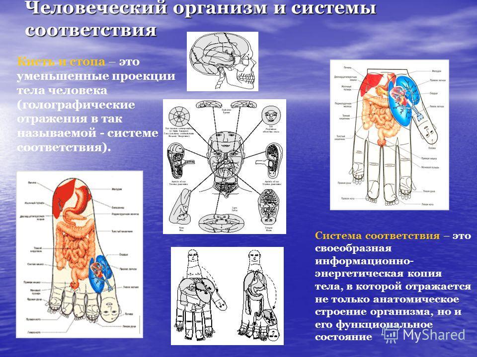 Человеческий организм и системы соответствия Кисть и стопа – это уменьшенные проекции тела человека (голографические отражения в так называемой - системе соответствия). Система соответствия – это своеобразная информационно- энергетическая копия тела,
