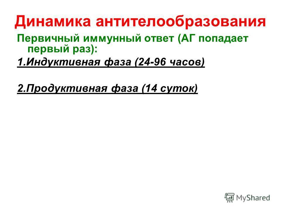 Динамика антителообразования Первичный иммунный ответ (АГ попадает первый раз): 1. Индуктивная фаза (24-96 часов) 2. Продуктивная фаза (14 суток)