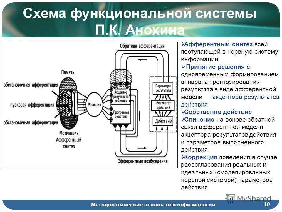 10 Методологические основы психофизиологии Схема функциональной системы П.К. Анохина Афферентный синтез всей поступающей в нервную систему информации Принятие решения с одновременным формированием аппарата прогнозирования результата в виде афферентно