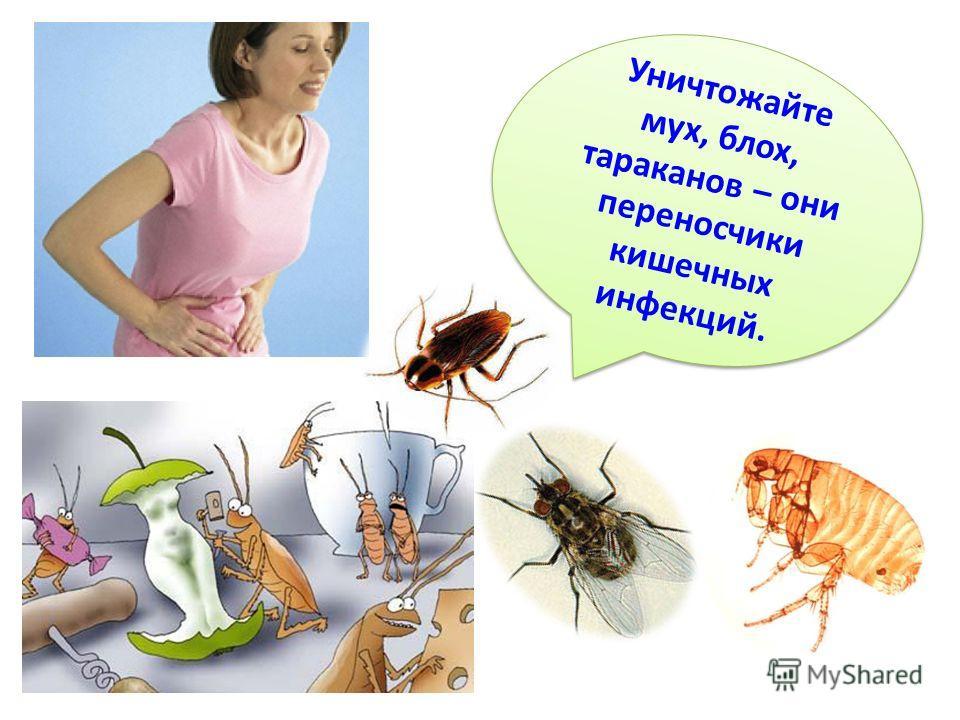 Уничтожайте мух, блох, тараканов – они переносчики кишечных инфекций. У н и ч т о ж а й т е м у х, б л о х, т а р а к а н о в – о н и п е р е н о с ч и к и к и ш е ч н ы х инфекций.