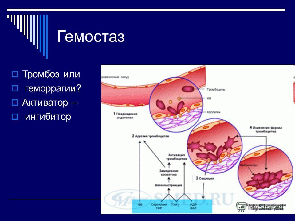 Гемостаз Тромбоз или геморрагии? Активатор – ингибитор