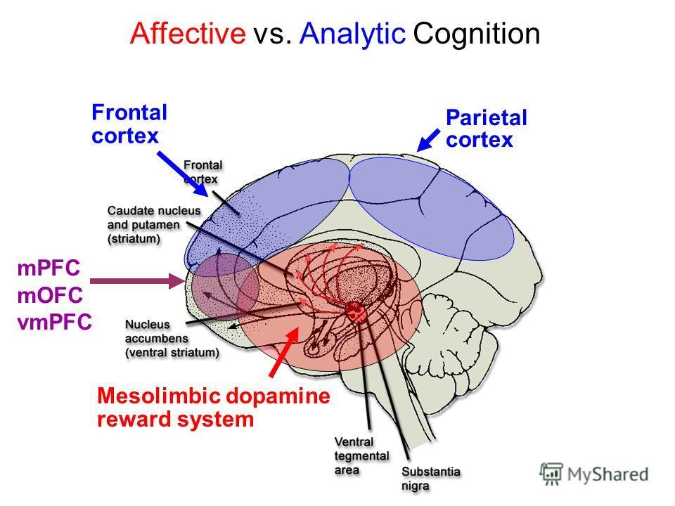 Mesolimbic dopamine reward system Frontal cortex Parietal cortex Affective vs. Analytic Cognition mPFC mOFC vmPFC