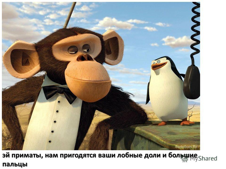 эй приматы, нам пригодятся ваши лобные доли и большие пальцы