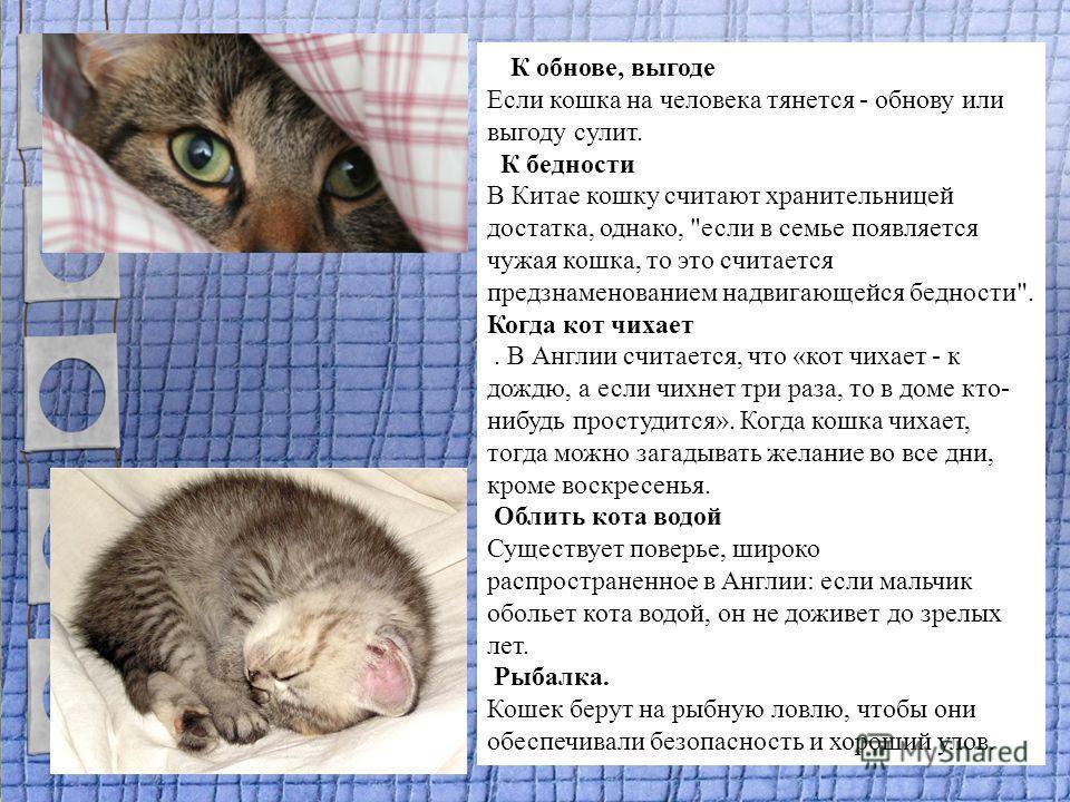 К обнове, выгоде Если кошка на человека тянется - обнову или выгоду сулит. К бедности В Китае кошку считают хранительницей достатка, однако,