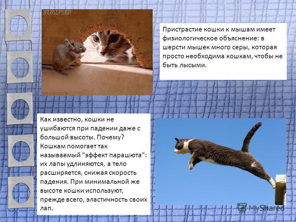 Пристрастие кошки к мышам имеет физиологическое объяснение: в шерсти мышек много серы, которая просто необходима кошкам, чтобы не быть лысыми. Как известно, кошки не ушибаются при падении даже с большой высоты. Почему? Кошкам помогает так называемый