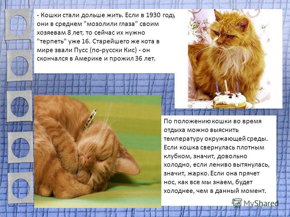 - Кошки стали дольше жить. Если в 1930 году они в среднем