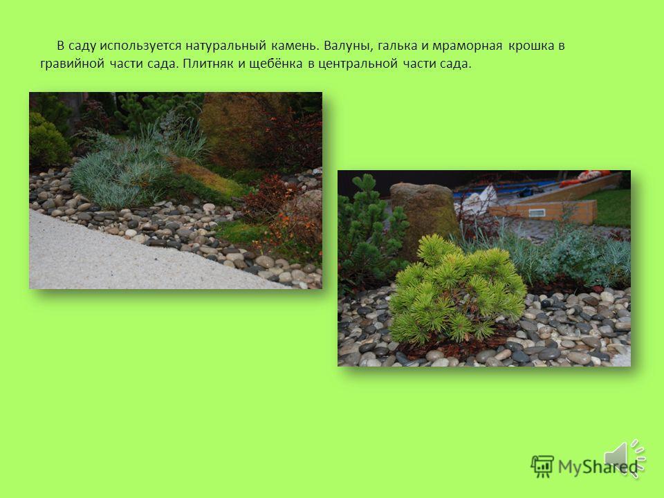 В саду применяются такие растения как Туя, Магония падуболистная, Можжевельник, Сосна горная, Дёрен белый, Лаванда, Пеларгония, Мята, Чабрец, Зверобой.