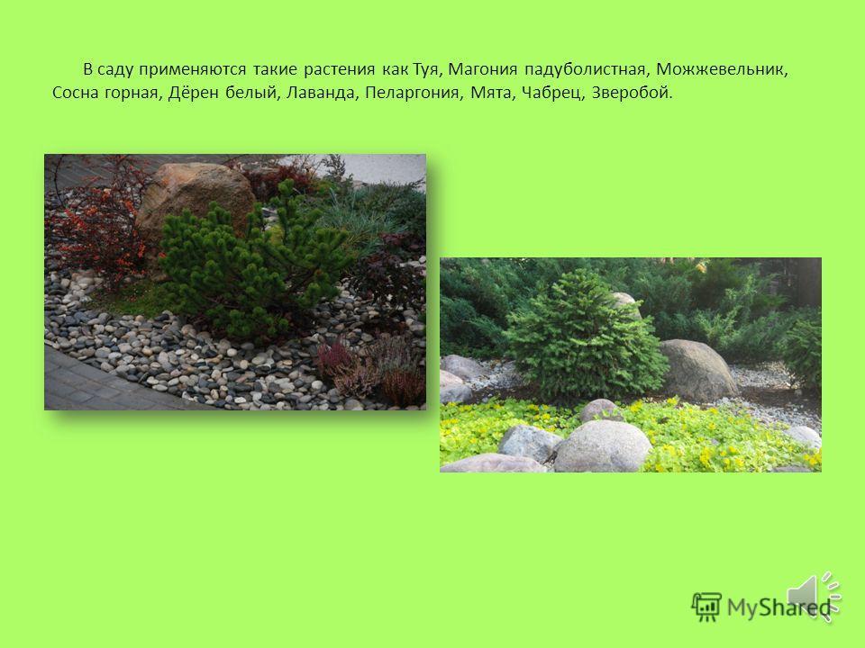По шпалерам вверх поднимаются вьющиеся растения жасмин и плющ.