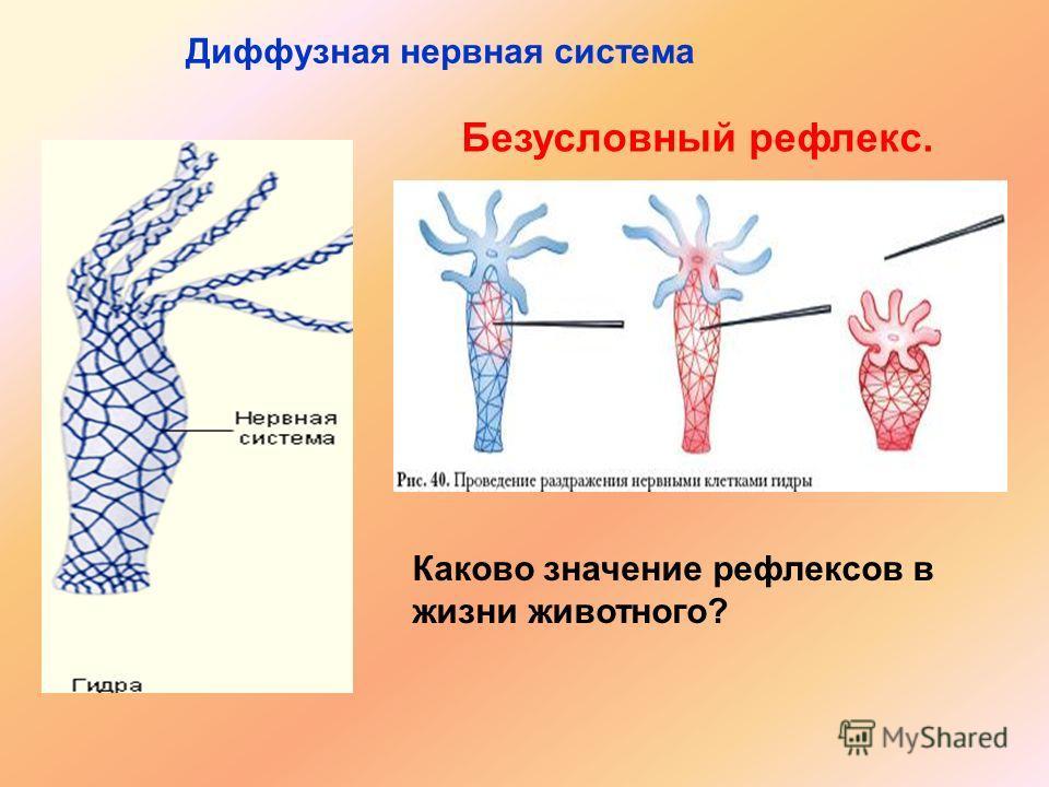 Диффузная нервная система Безусловный рефлекс. Каково значение рефлексов в жизни животного?