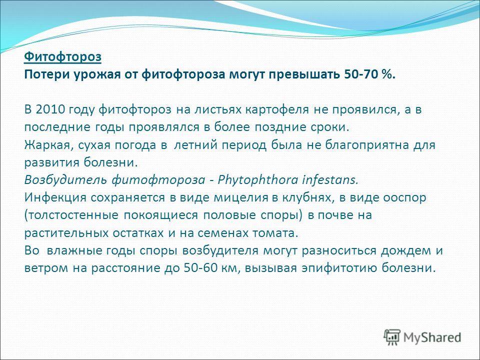 Фитофтороз Потери урожая от фитофтороза могут превышать 50-70 %. В 2010 году фитофтороз на листьях картофеля не проявился, а в последние годы проявлялся в более поздние сроки. Жаркая, сухая погода в летний период была не благоприятна для развития бол