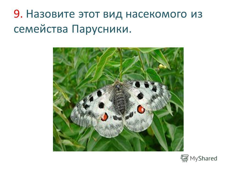 9. Назовите этот вид насекомого из семейства Парусники.