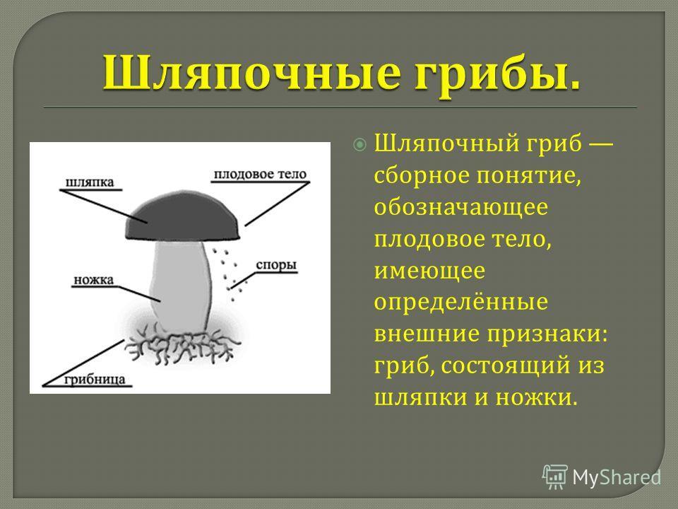 Шляпочный гриб сборное понятие, обозначающее плодовое тело, имеющее определённые внешние признаки : гриб, состоящий из шляпки и ножки.