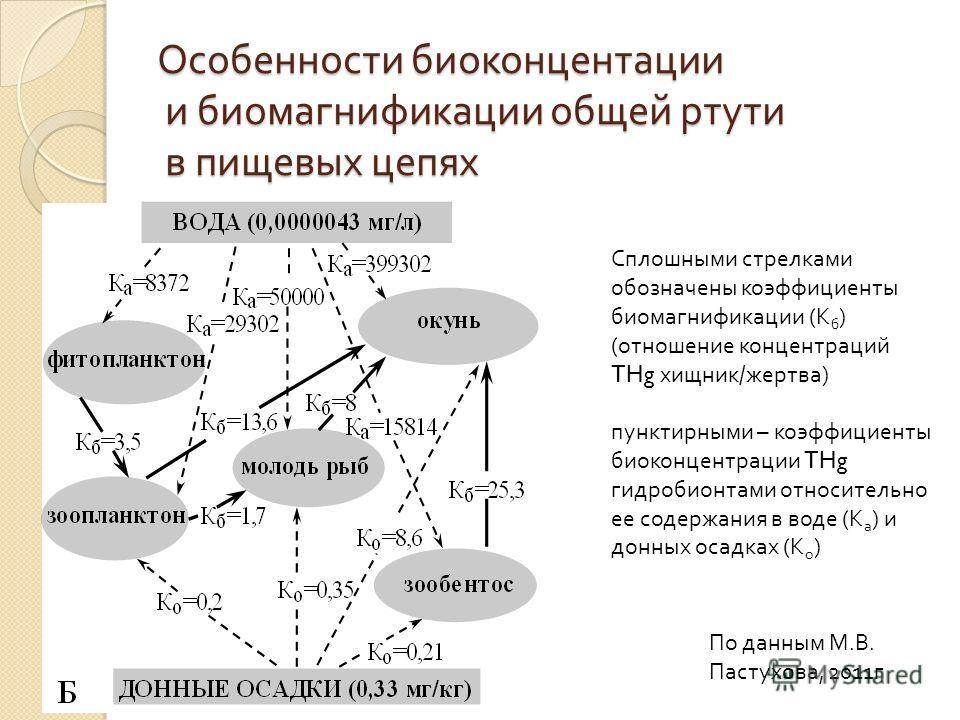 Особенности биоконцентации и биомагнификации общей ртути в пищевых цепях Сплошными стрелками обозначены коэффициенты биомагнификации ( К б ) ( отношение концентраций THg хищник / жертва ) пунктирными – коэффициенты биоконцентрации THg гидробионтами о