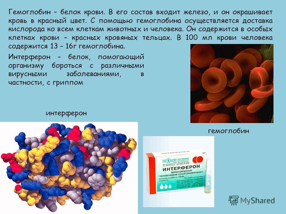 Гемоглобин – белок крови. В его состав входит железо, и он окрашивает кровь в красный цвет. С помощью гемоглобина осуществляется доставка кислорода ко всем клеткам животных и человека. Он содержится в особых клетках крови – красных кровяных тельцах.
