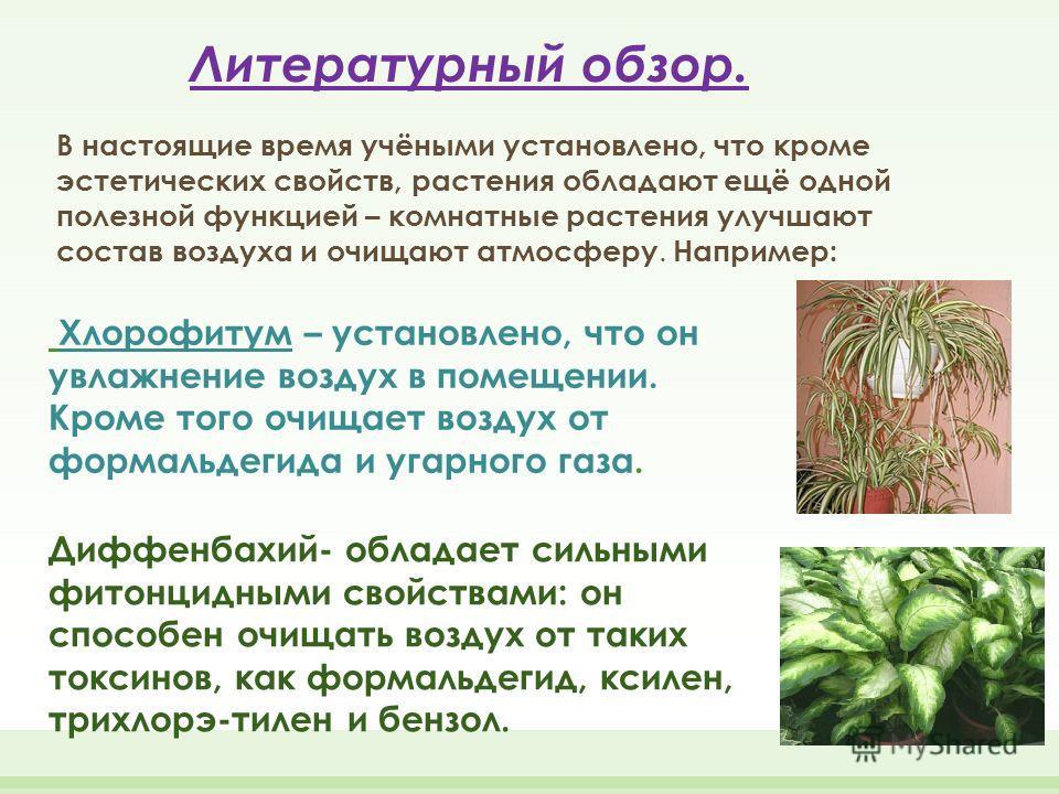 Литературный обзор. В настоящие время учёными установлено, что кроме эстетических свойств, растения обладают ещё одной полезной функцией – комнатные растения улучшают состав воздуха и очищают атмосферу. Например: Хлорофитум – установлено, что он увла