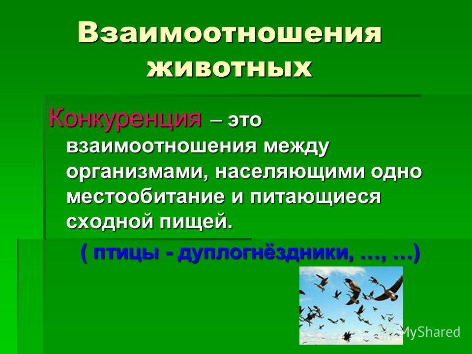 Взаимоотношения животных Конкуренция – это взаимоотношения между организмами, населяющими одно местообитание и питающиеся сходной пищей. ( птицы - дуплогнёздники, …, …)