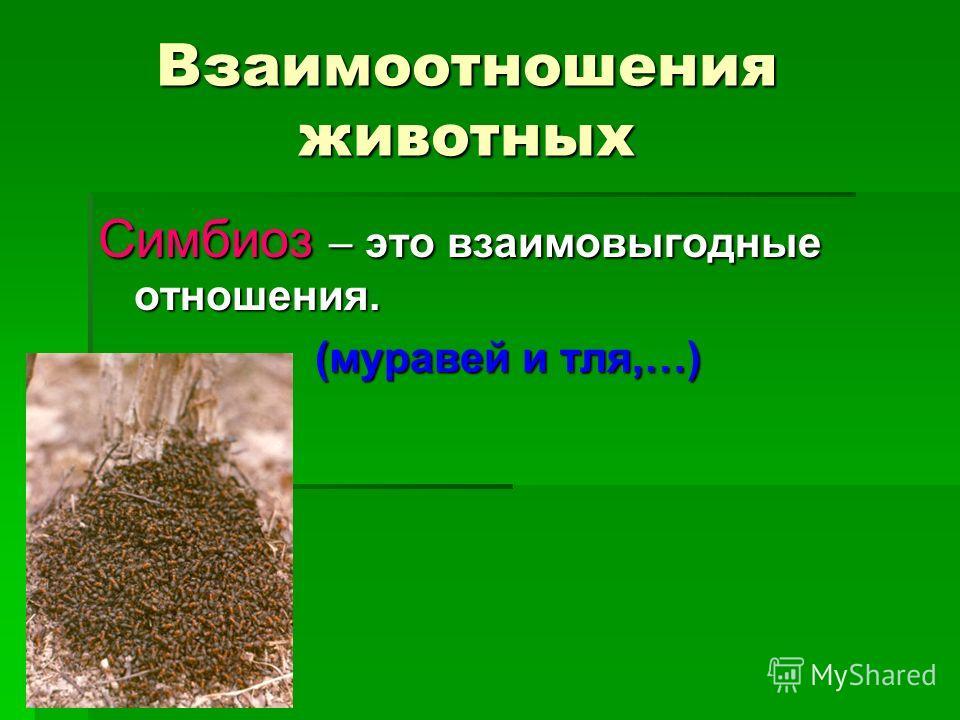 Взаимоотношения животных Симбиоз – это взаимовыгодные отношения. (муравей и тля,…)