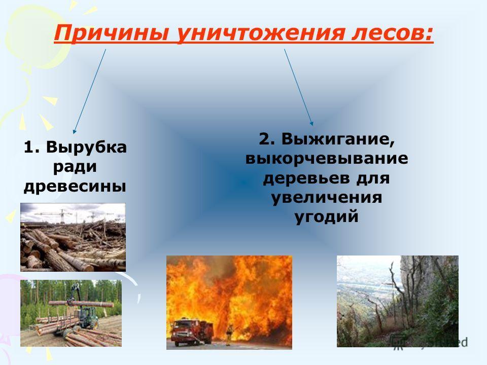 2 проблема: Как спасти леса? Лес – это «легкие» нашей планеты.