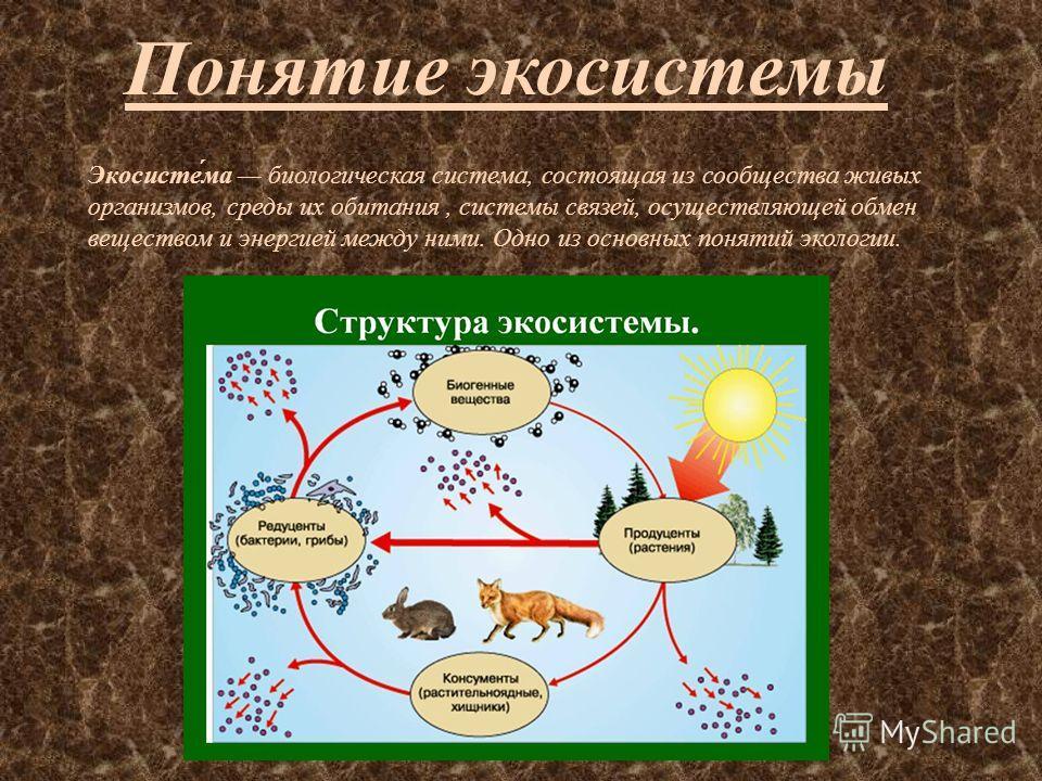 Понятие экосистемы Экосисте́ма биологическая система, состоящая из сообщества живых органисмов, среды их обитания, системы связей, осуществляющей обмен веществом и энергией между ними. Одно из основных понятий экологии.