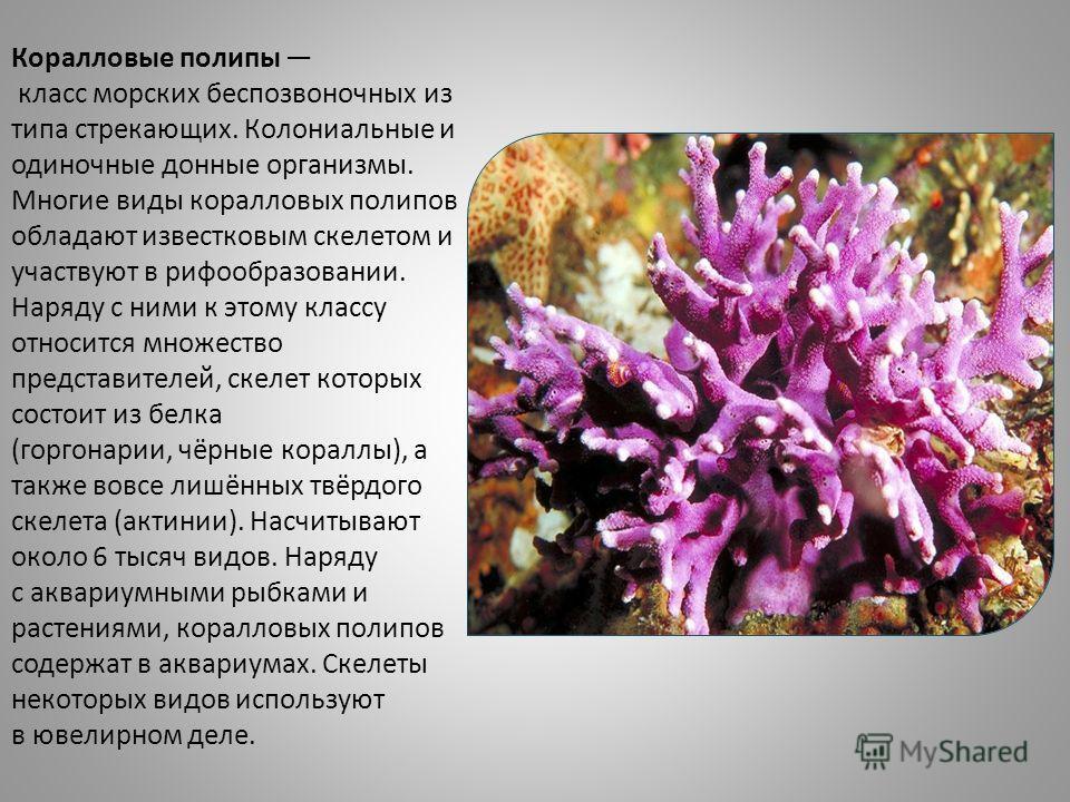 Коралловые полипы класс морских беспозвоночных из типа стрекающих. Колониальные и одиночные донные организмы. Многие виды коралловых полипов обладают известковым скелетом и участвуют в профобразовании. Наряду с ними к этому классу относится множество