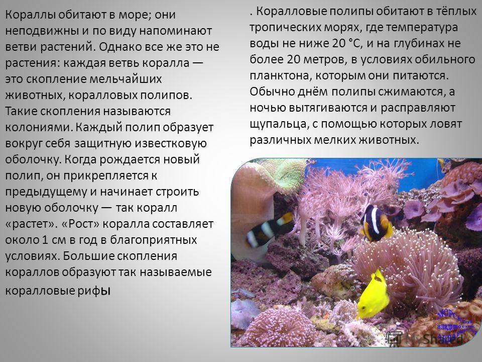 . Коралловые полипы обитают в тёплых тропических морях, где температура воды не ниже 20 °C, и на глубинах не более 20 метров, в условиях обильного планктона, которым они питаются. Обычно днём полипы сжимаются, а ночью вытягиваются и расправляют щупал