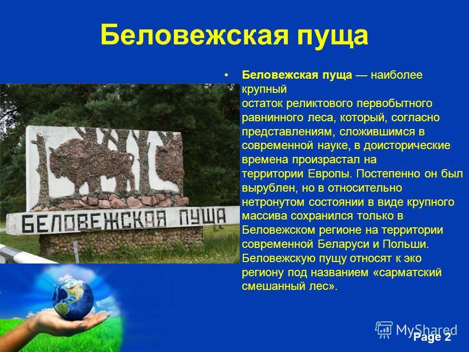 Free Powerpoint Templates Page 2 Беловежская пуща Беловежская пуща наиболее крупный остаток реликтового первобытного равнинного леса, который, согласно представлениям, сложившимся в современной науке, в доисторические времена произрастал на территори