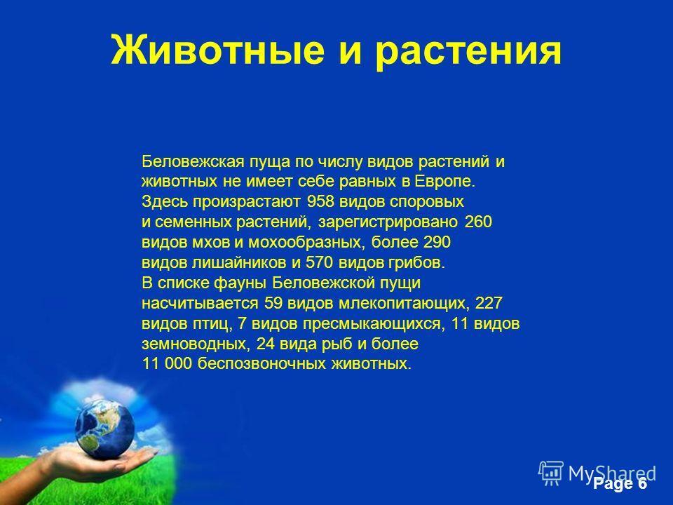 Free Powerpoint Templates Page 6 Животные и растения Беловежская пуща по числу видов растений и животных не имеет себе равных в Европе. Здесь произрастают 958 видов споровых и семенных растений, зарегистрировано 260 видов мхов и мохообразных, более 2