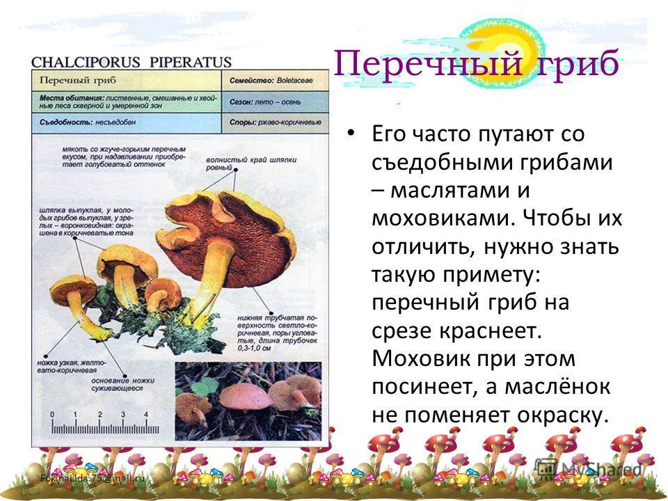 FokinaLida.75@mail.ru Перечный гриб Его часто путают со съедобными грибами – маслятами и моховиками. Чтобы их отличить, нужно знать такую примету: перечный гриб на срезе краснеет. Моховик при этом посинеет, а маслёнок не поменяет окраску.