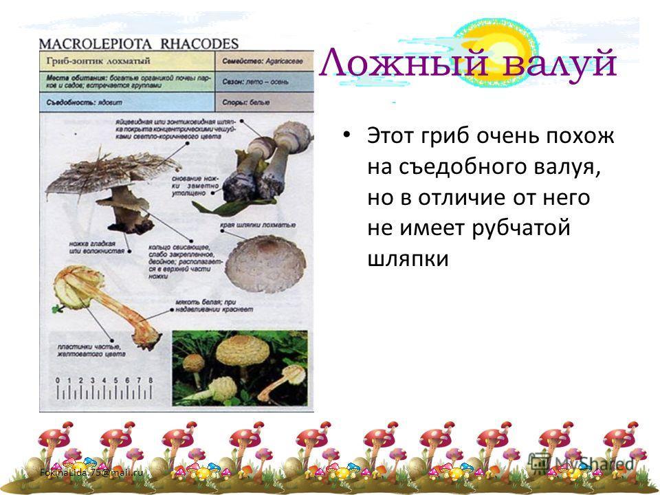 FokinaLida.75@mail.ru Ложный валуй Этот гриб очень похож на съедобного валуя, но в отличие от него не имеет рубчатой шляпки