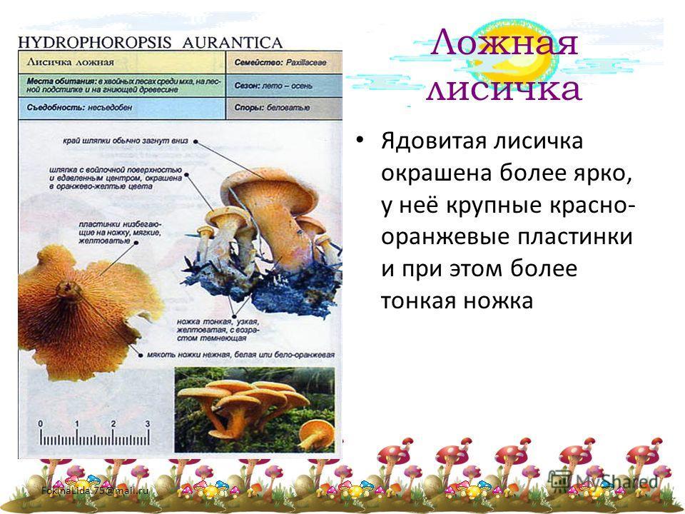 FokinaLida.75@mail.ru Ложная лисичка Ядовитая лисичка окрашена более ярко, у неё крупные красно- оранжевые пластинки и при этом более тонкая ножка