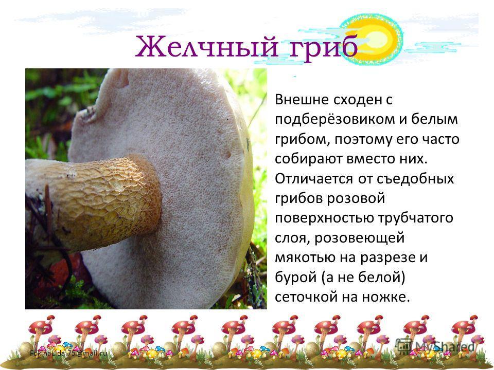 FokinaLida.75@mail.ru Желчный гриб Внешне сходен с подберёзовиком и белым грибом, поэтому его часто собирают вместо них. Отличается от съедобных грибов розовой поверхностью трубчатого слоя, розовеющей мякотью на разрезе и бурой (а не белой) сеточкой