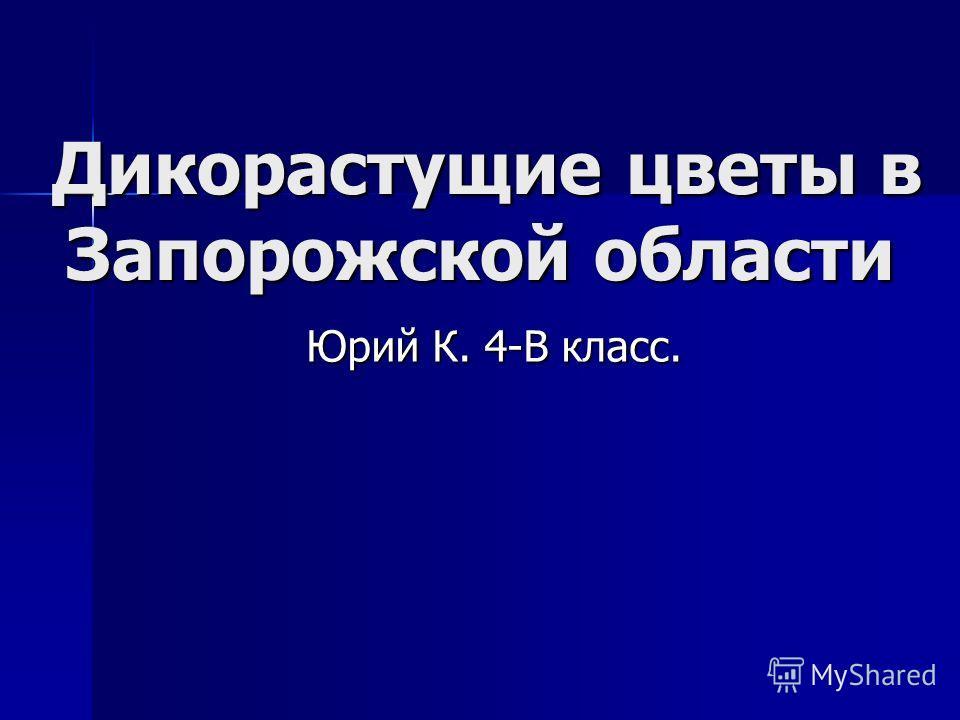 Дикорастущие цветы в Запорожской области Юрий К. 4-В класс.