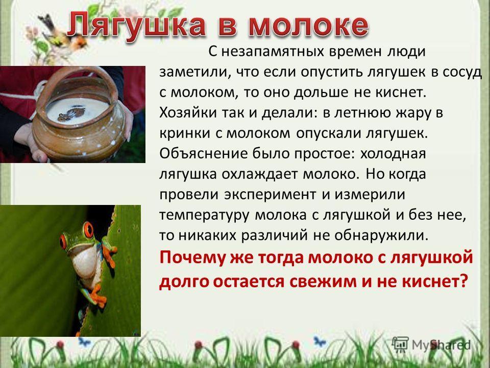 С незапамятных времен люди заметили, что если опустить лягушек в сосуд с молоком, то оно дольше не киснет. Хозяйки так и делали: в летнюю жару в кринки с молоком опускали лягушек. Объяснение было простое: холодная лягушка охлаждает молоко. Но когда п