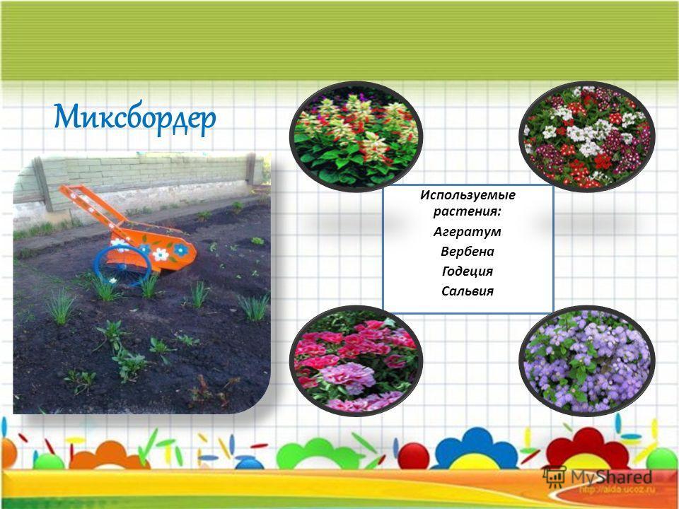 Используемые растения: Агератум Вербена Годеция Сальвия Миксбордер