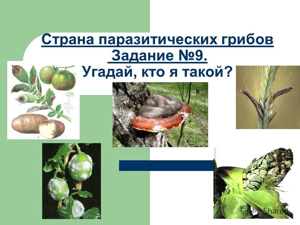 Страна паразитических грибов Задание 9. Угадай, кто я такой?