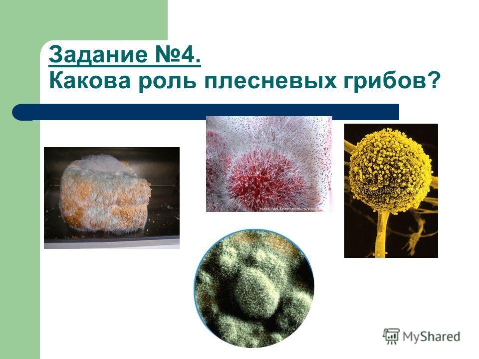 Задание 4. Какова роль плесневых грибов?