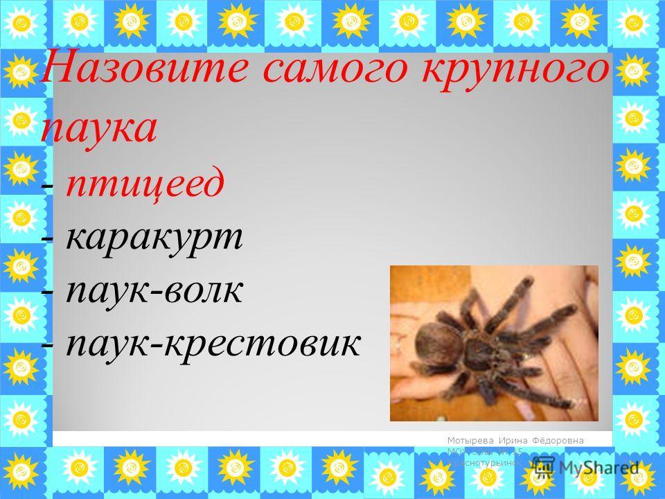 Назовите самого крупного паука - птицеед - каракурт - паук-волк - паук-крестовик 11 Мотырева Ирина Фёдоровна МОУ СОШ 15 Краснотурьинск