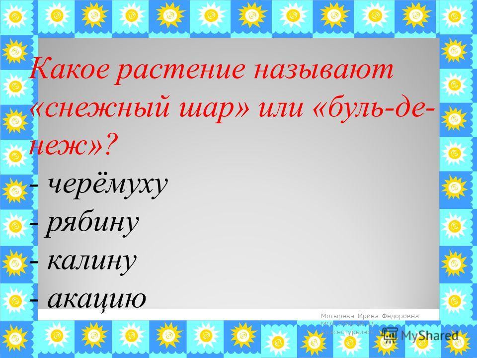 Какое растение называют «снежный шар» или «бульденеж»? - черёмуху - рябину - калину - акацию 27 Мотырева Ирина Фёдоровна МОУ СОШ 15 Краснотурьинск