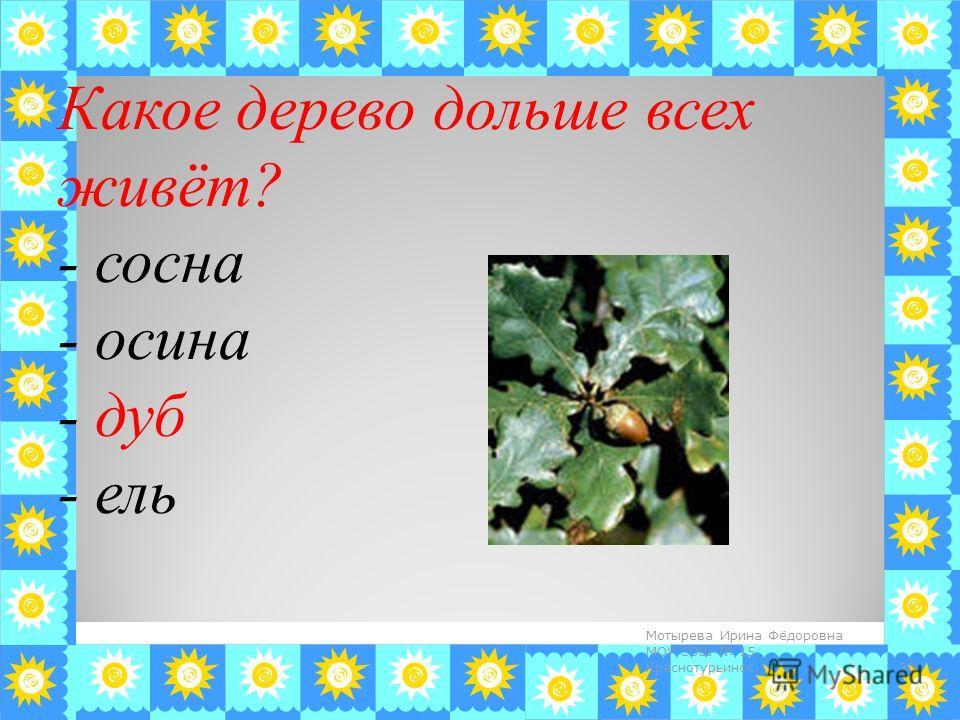 Какое дерево дольше всех живёт? - сосна - осина - дуб - ель 30 Мотырева Ирина Фёдоровна МОУ СОШ 15 Краснотурьинск