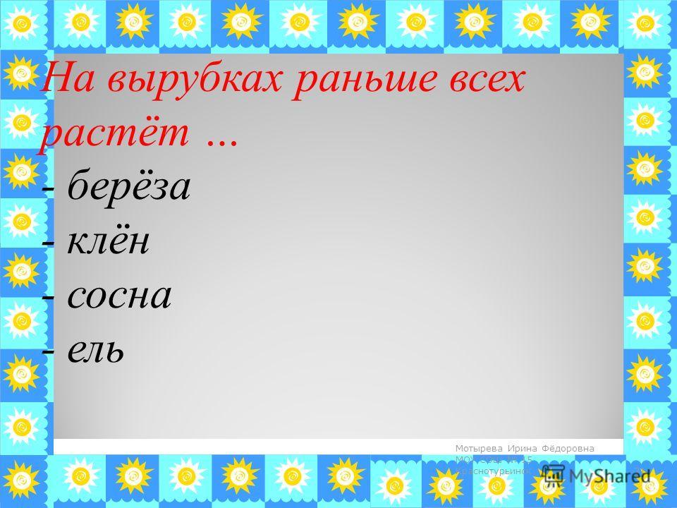 На вырубках раньше всех растёт … - берёза - клён - сосна - ель 31 Мотырева Ирина Фёдоровна МОУ СОШ 15 Краснотурьинск