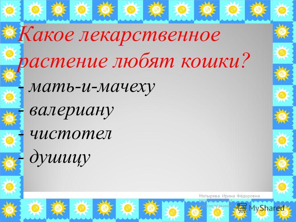Какое лекарственное растение любят кошки? - мать-и-мачеху - валериану - чистотел - душицу 37 Мотырева Ирина Фёдоровна МОУ СОШ 15 Краснотурьинск
