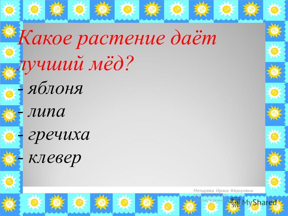 Какое растение даёт лучший мёд? - яблоня - липа - гречиха - клевер 41 Мотырева Ирина Фёдоровна МОУ СОШ 15 Краснотурьинск