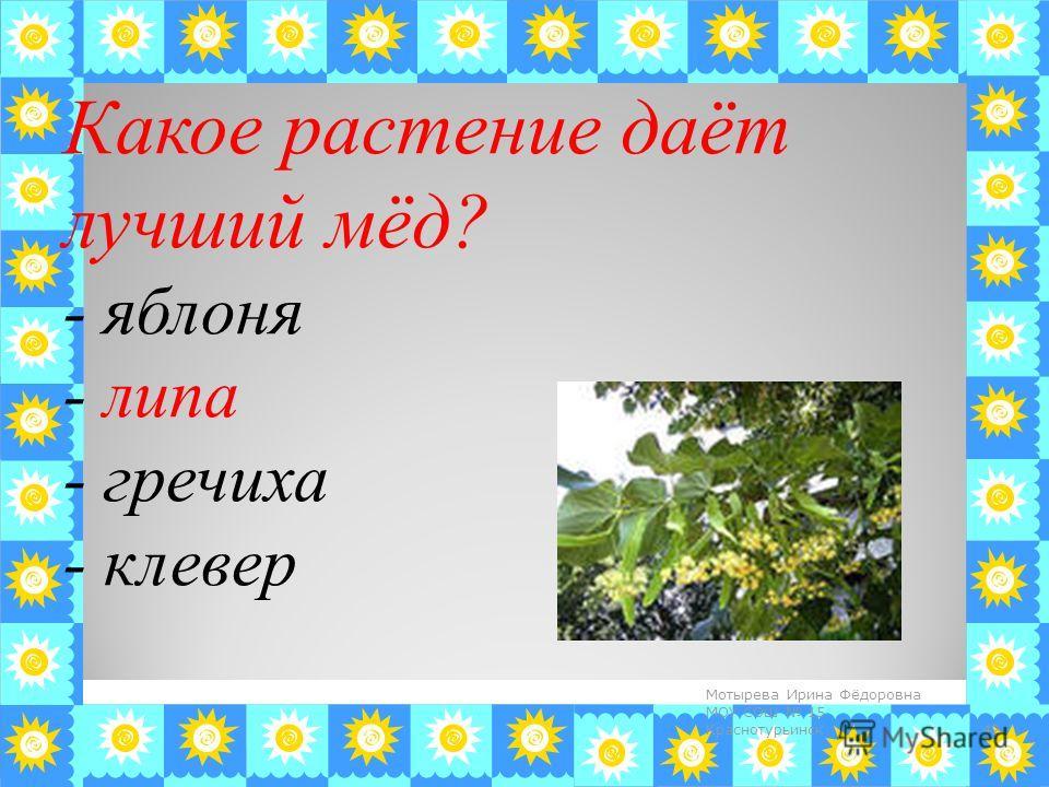 Какое растение даёт лучший мёд? - яблоня - липа - гречиха - клевер 42 Мотырева Ирина Фёдоровна МОУ СОШ 15 Краснотурьинск