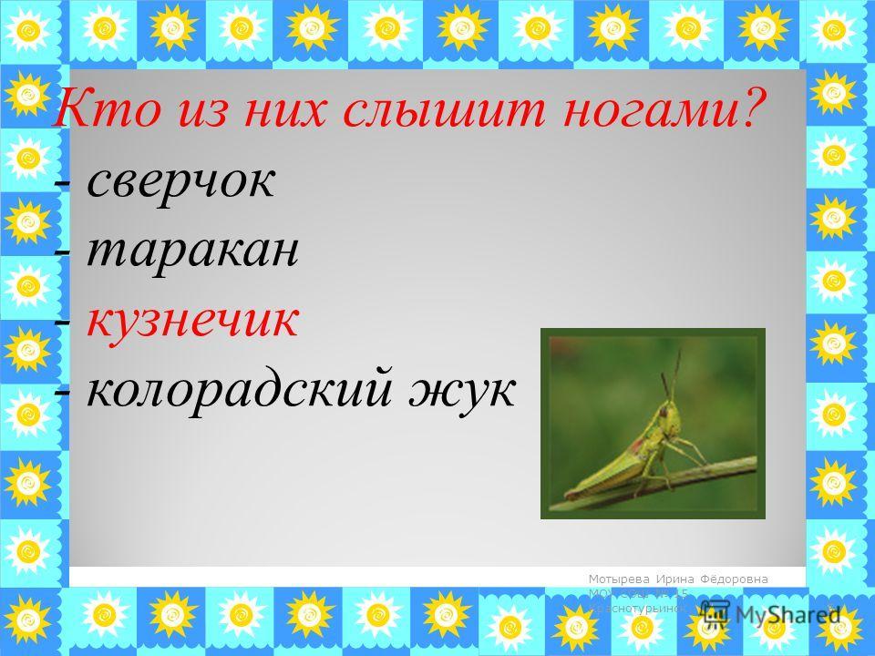 Кто из них слышит ногами? - сверчок - таракан - кузнечик - колорадский жук 5 Мотырева Ирина Фёдоровна МОУ СОШ 15 Краснотурьинск